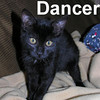 Dancer was adopted from the Cat House and Adoption Center on Saturday, March 7, 2009.