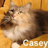 Casey was adopted from the Cat House and Adoption Center on Saturday, March 7, 2009.