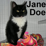Jane Doe was adopted from the Cat House and Adoption Center on Saturday, January 10, 2009.