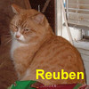 Reuben was adopted from the Cat House and Adoption Center on Saturday, January 10, 2008.