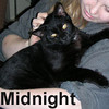 Midnight was adopted from the Cat House and Adoption Center on Saturday, January 10, 2009.