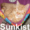 Sunkist was adopted from the Cat House and Adoption Center on Saturday, February 14, 2009.