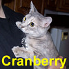 Cranberry was adopted from the Cat House and Adoption Center on Sunday, January 11, 2009.