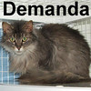 Demanda was adopted from the Cat House and Adoption Center on Wednesday, February 25, 2009.