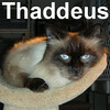 Thaddeus Thunderfoot was adopted from the Cat House and Adoption Center on Saturday, March 7, 2009.