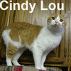 Cindy Lou was adopted from the Cat House and Adoption Center on Saturday, January 17, 2009.