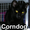 Corndog was adopted from the Cat House and Adoption Center on Sunday, March 15, 2009.