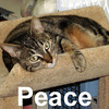 Peace was adopted from the Cat House and Adoption Center on Saturday, January 31, 2009.