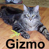 Gizmo was adopted from the Cat House and Adoption Center on Wednesday, January 21, 2009.