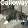 Calloway and Stuart were adopted from the Cat House and Adoption Center on Saturday, February 28, 2009.