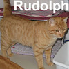 Rudolph was adopted from the Feline Friends Cat House and Adoption Center on Saturday, February 21, 2009.
