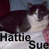 Hattie Sue was adopted from the Cat House and Adoption Center on Monday, January 5, 2009.