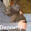 Dennehy was adopted from the Cat House and Adoption Center on Friday, January 9, 2009.