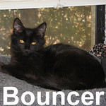 Bouncer was adopted from the Cat House and Adoption Center on Sunday, January 4, 2009.