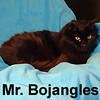 Mr. Bojangles was adopted from the Cat House and Adoption Center on Saturday, March 7, 2009.