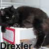 Drexler was adopted from the Cat House and Adoption Center on Wednesday, March 4, 2009.