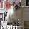 Patriot was adopted from the Cat House and Adoption Center on Saturday, April 20, 2013.