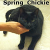 Spring Chickie was adopted from the Cat House and Adoption Center on Saturday, April 6, 2013.