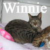 Winnie was adopted from the Cat House and Adoption Center on Monday, April 22, 2013.
