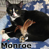 Monroe was adopted from the Cat House and Adoption Center on Saturday, April 20, 2013.