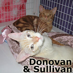 Donovan (Red Tabby) and Sullivan (Flame Point Siamese) were adopted together from the Cat House and Adoption Center on Saturday April 6, 2013.