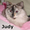 Judy was adopted from the Cat House and Adoption Center on Saturday, May 18, 2013.<br /> <br /> Judge Judy.<br /> <br /> Cat court is now in session and I am here to judge. Which one of you special cat people will be lucky enough to win my case? Come in and let Judy be the judge.