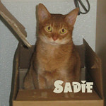 Sadie was adopted from her foster home at Steamboat Animal Hospital on Friday, March 15, 2013.