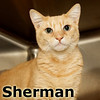 Sherman was adopted from the Cat House and Adoption Center on Saturday, June 1, 2013.<br /> <br /> Sherman<br /> <br /> A new world ...<br /> <br /> Hoarding is a thing of the past for Sherman. He has changed his ways and is so happy to be free of his past. Sherman is very happy and responsive, although if approached too quickly he is still a bit unsure what will be happening and, once he knows it's all about him, he is one happy guy.