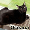 Oceana was adopted from the Cat House and Adoption Center on Monday, May 27, 2013.<br /> <br /> Oceana<br /> <br /> In and out like the tide.<br /> <br /> Oceana has been in and out of our facility three times now and she needs that one last stop. She is one beautiful girl with school girl charm and has a large vocabulary. Oshi is looking for a companion that is stable and ready for a commitment.
