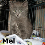 Mel and Jayne (brothers) were adopted together from Mud Bay on Saturday April 20, 2013.