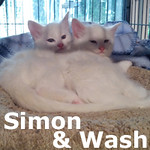 Simon and Wash (brothers) were adopted together from Mud Bay on Saturday April 20, 2013.