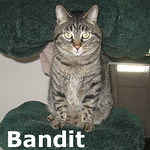 Bandit was adopted from the Cat House and Adoption Center on Saturday, April 6, 2013.