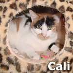 Cali was adopted from the Cat House and Adoption Center on Saturday, March 23, 2013.<br /> <br /> Cali<br /> <br /> True Calico.<br /> <br /> Trust me, it is my way or you go your own way. I am beautiful, I am loving and I deserve the best. Strong on the outside, just a girl wanting love from within.