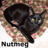 Filbert and Nutmeg were adopted together from the Cat House and Adoption Center on Saturday, April 13, 2013.