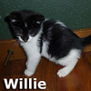 Willie was adopted from the Cat House and Adoption Center on June 1, 2013.