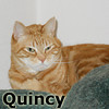 Quincy was adopted from the Cat House and Adoption Center on Saturday, April 27, 2013.