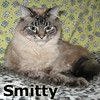 Smitty and Token were adopted from the Cat House and Adoption Center on Friday, April 19, 2013.<br /> <br /> Smitty <br /> <br /> A love machine.<br /> <br /> Laid-back and lovable.  Smitty doesn't ask for much but, if you offer your hand, he wants your attention.