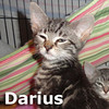 Darius was adopted from his foster home on Saturday, May 11, 2013.