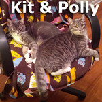 Kit and Polly were adopted together from the Cat House and Adoption Center on Saturday, April 6, 2013.