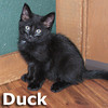 Duck and Goose were adopted from their foster home on Friday, December 13, 2013.