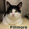 Fillmore was adopted from the Cat House and Adoption Center on Saturday, December 14, 2013.<br /> <br /> Fillmore<br /> <br /> There's a lot of love out there man.<br /> <br /> If peace, love and rock 'n roll are as much a part of your life as it is his, you might want to come and meet and greet this handsome guy.