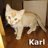 Lucy and Karl were adopted together from the Cat House and Adoption Center on Saturday, November 9, 2013.<br /> <br /> Karl<br /> <br /> Playing the lead role.<br /> <br /> Karl was wandering around in a dumpster corral looking for some nourishment when he was picked up by a kind soul. He is all cleaned up and feeling fine, ready for his magnum opus - being your best feline friend!