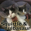 Buldazar and Squirtle (sisters) were adopted from the Cat House and Adoption Center on Saturday, January 11, 2014.
