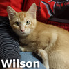 Wilson was adopted from the Cat House and Adoption Center on Saturday, January 11, 2014.