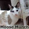 Moose Munch was adopted from the Cat House and Adoption Center on Saturday, January 4, 2014.<br /> <br /> Moose Munch<br /> <br /> A special recipe.<br /> <br /> Who doesn't love a little Moose Munch in their lives? Great inside and out, this handsome and fun loving guy will keep you smiling and coming back for more.