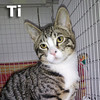 Ti was adopted from the Cat House and Adoption Center on Sunday, December 1, 2013.