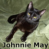 Johnnie May was adopted from the Cat House and Adoption Center on Saturday, November 9, 2013<br /> <br /> Johnnie May<br /> <br /> It's your day... to shine!<br /> <br /> With no more kittens to take care of, Johnnie May is ready to live her own life of comfort and safety, in a home of her very own instead of the porch she was living on. Beautiful and serene, Johnnie May will warm your heart.