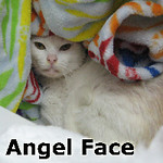 Angel Face was adopted from the Cat House and Adoption Center on Tuesday, November 26, 2013.<br /> <br /> Angel Face<br /> <br /> With the face of an angel.<br /> <br /> Dumped and despaired, but with an angel watching out for her and making sure that life would be secured. Flea allergies (covering her body) were easily treated and this Angel is awaiting her forever home.