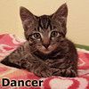 Dancer and Donder (brothers) were adopted from the Cat House and Adoption Center on Saturday, January 11, 2014.<br /> <br /> Dancer, On leave until next Christmas Season.<br /> <br /> This special little one fulfilled his holiday duties and resting in a warm place with a foster family while he awaits to see what the New Year brings. He is adorable, playful and ready for a forever home. Take two and enjoy and relax while he entertains you.