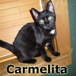 Carmelita and Kree were adopted from the Cat House and Adoption Center on Saturday, November 23, 2013.
